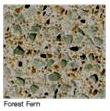 Forest-Fern in Atlanta Georgia