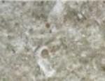 Jerusalem Grey Granite Countertop Limestone